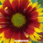 Early Summer Flower Garden