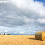 Wheat Straw Bales