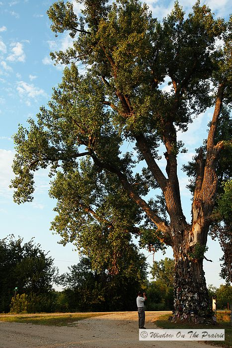 Article About a Shoe Tree