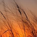 Autumn Evening On The Prairie