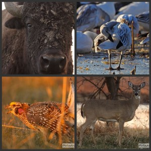 Prairie-collage
