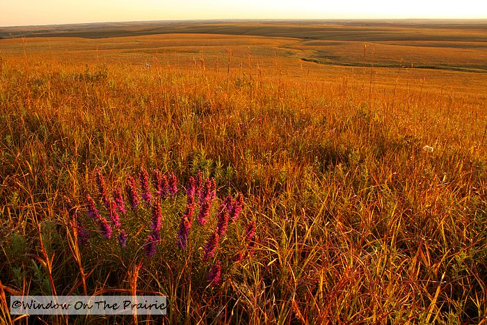 fall in the flint hills window on the prairie