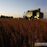 Soybean Harvest - Video Two
