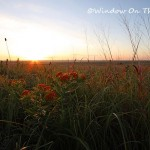 Sunrise On The Prairie