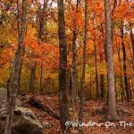 Scenes Of Fall In Arkansas