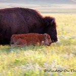  Stories of the AMERICAN PRAIRIE