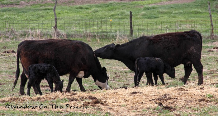 In_The_Pasture08