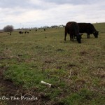 In The Pasture