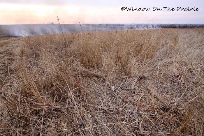 Prairie_Fire01