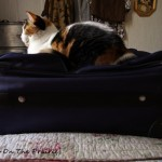 Kitty And The Suitcase