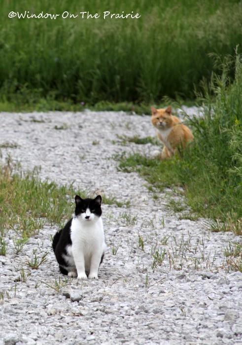 Barn_Kitties01