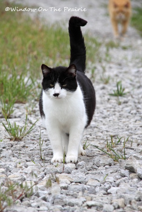 Barn_Kitties02