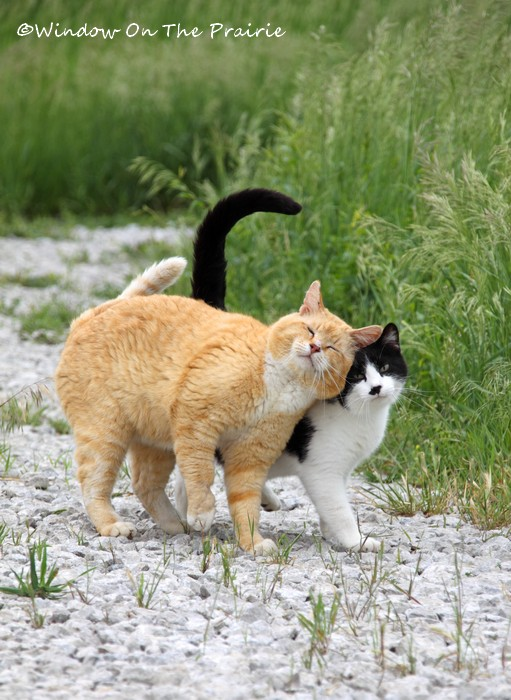 Barn_Kitties03