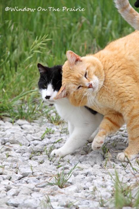 Barn_Kitties04