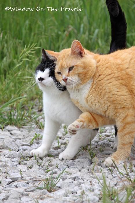 Barn_Kitties05