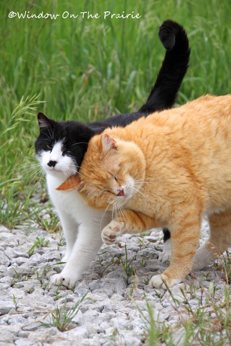 Barn_Kitties06