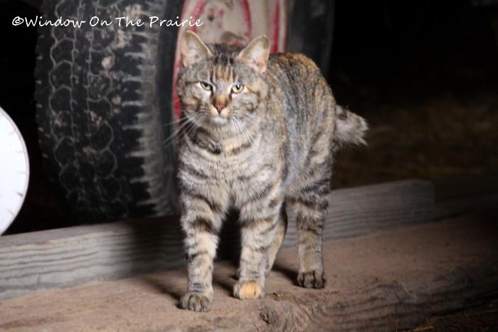 Barn_Kitties08