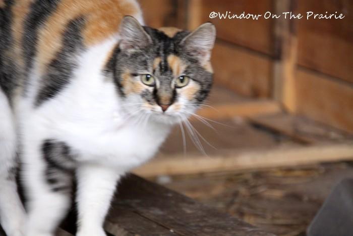 Barn_Kitties09