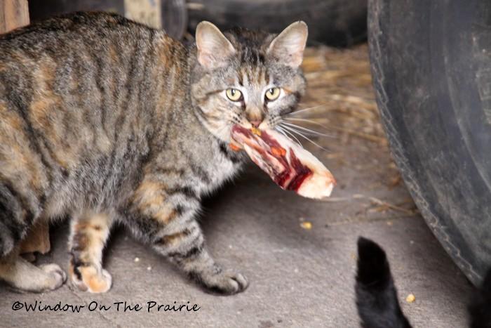 Barn Cat Kittens Www Imgkid Com The Image Kid Has It