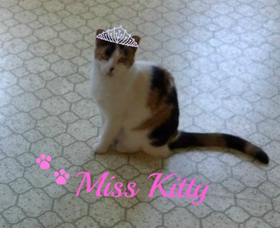 Miss Kitty1