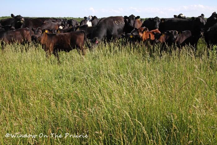 Pasture03