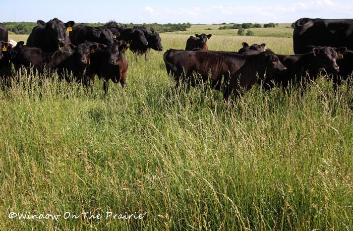 Pasture05