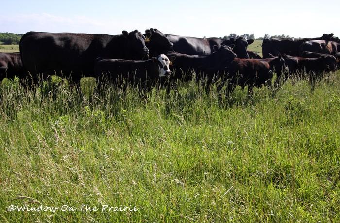 Pasture06