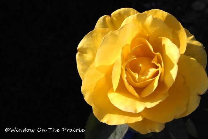 Rose_Garden05