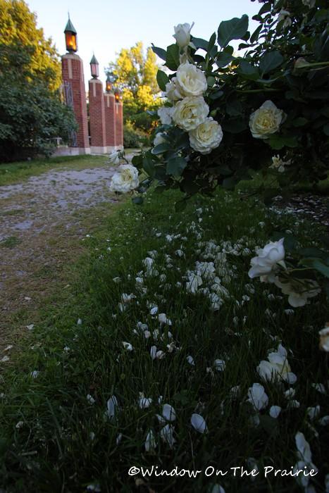 Rose_Garden16