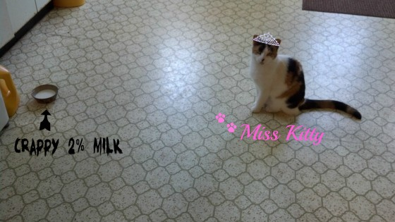 miss kitty