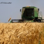 Wheat Harvest Part 1