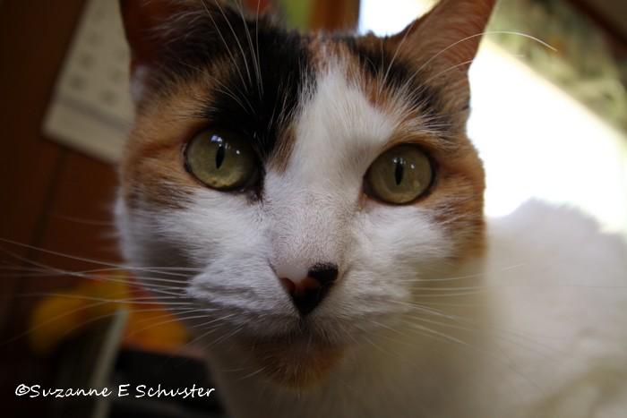 Kitty10