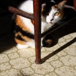 Kitty and The Antique Chair
