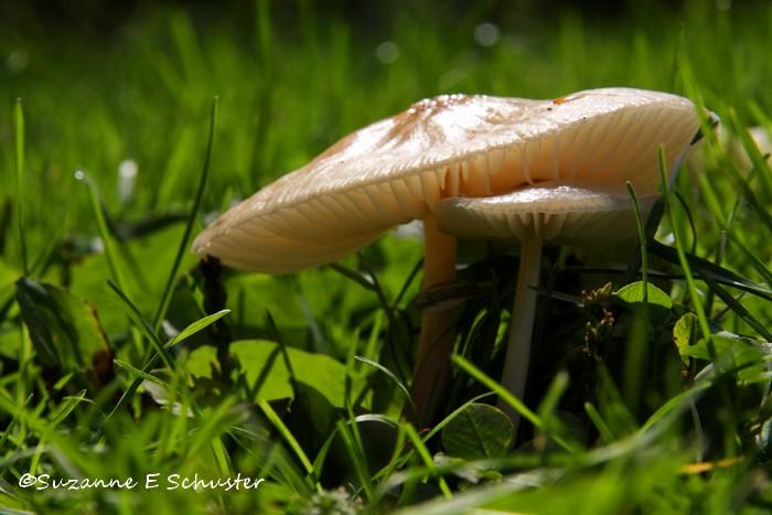 Mushroom02