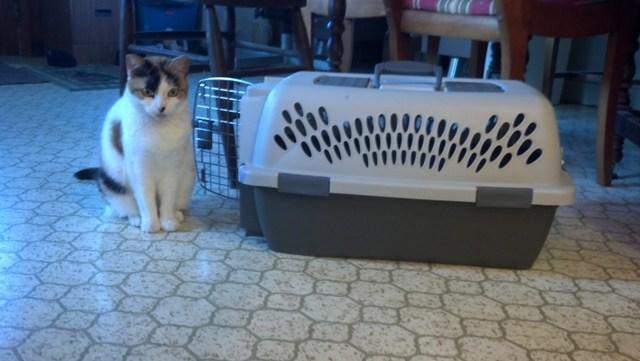 Kitty (10)