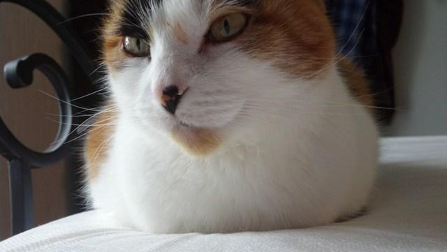 Kitty (13)