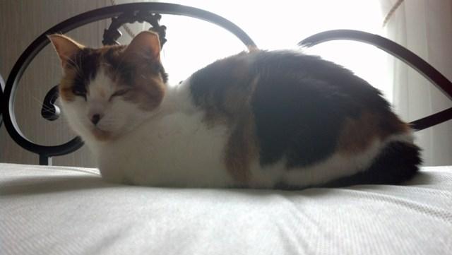 Kitty (14)