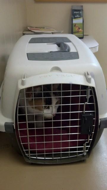 Kitty (16)