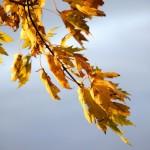 Waning Fall