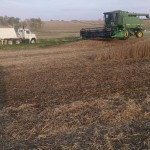 Soybean Harvest 2014