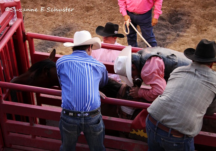 PREPARING TO BRONC RIDE
