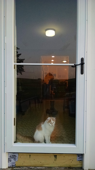 Our new storm door. It's Muffin approved.