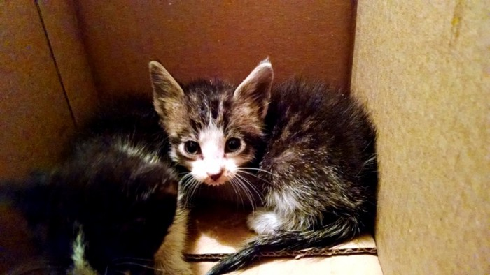 Kittens (1)