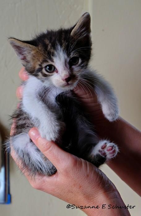 Kittens02