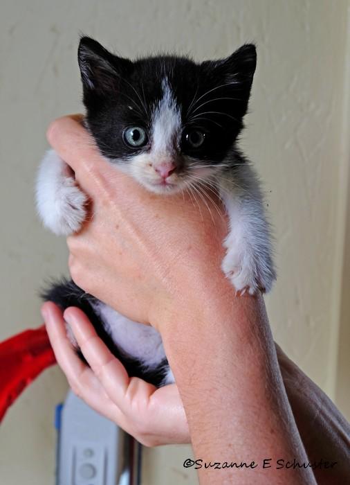 Kittens04