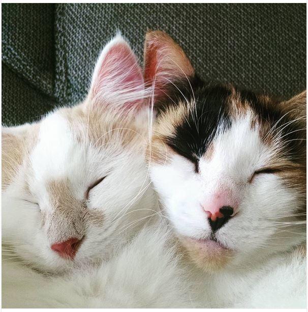 Muffin & Kitty