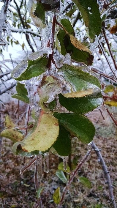 Ice (8)